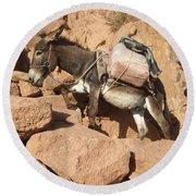 Donkey Of Mt. Sinai Round Beach Towel