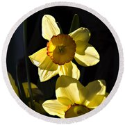 Round Beach Towel featuring the photograph Dos Daffs by Joe Schofield