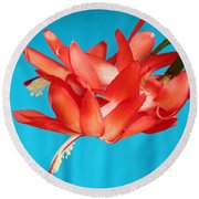 Double Bloom In Red Round Beach Towel by E Faithe Lester