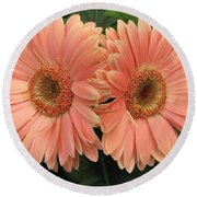 Round Beach Towel featuring the photograph Double Delight - Coral Daisies by Dora Sofia Caputo Photographic Art and Design