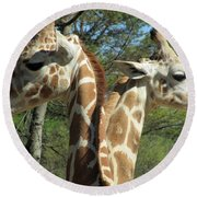 Giraffes With A Twist Round Beach Towel