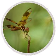 Round Beach Towel featuring the photograph Dragonfly 2 by Olga Hamilton