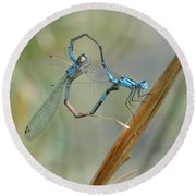 Dragonfly Courtship Round Beach Towel