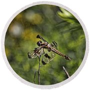 Round Beach Towel featuring the photograph Dragonfly by Daniel Sheldon