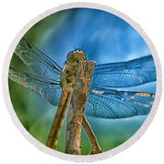 Round Beach Towel featuring the photograph Dragonfly by Dennis Baswell