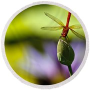 Dragonfly Display Round Beach Towel