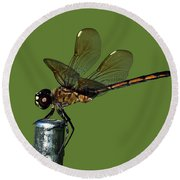 Round Beach Towel featuring the photograph Dragonfly by Meg Rousher