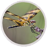 Round Beach Towel featuring the photograph The Halloween Pennant Dragonfly by Olga Hamilton