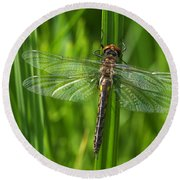 Dragonfly On Grass Round Beach Towel