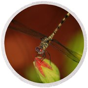 Round Beach Towel featuring the photograph Dragonfly On Hibiscus by Leticia Latocki