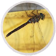 Round Beach Towel featuring the photograph Dragonfly Web by Melanie Lankford Photography