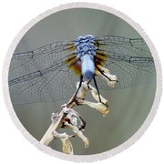 Dragonfly Wing Details II Round Beach Towel by Lilliana Mendez