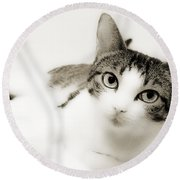 Dreamy Cat 2 Round Beach Towel