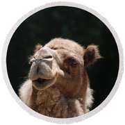 Dromedary Camel Face Round Beach Towel by DejaVu Designs