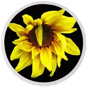 Droops Sunflower With Oil Painting Effect Round Beach Towel by Rose Santuci-Sofranko
