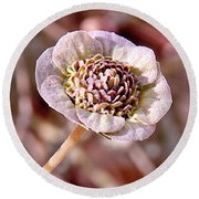 Round Beach Towel featuring the photograph Dry Bloom by Mae Wertz