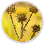 Dry Brown Thistle Round Beach Towel