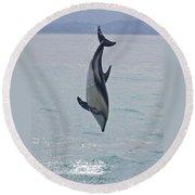 Dusky Dolphin, Kaikoura, New Zealand Round Beach Towel by Venetia Featherstone-Witty