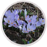 Early Crocuses Round Beach Towel