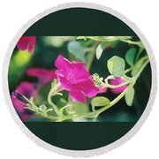 Round Beach Towel featuring the photograph Early Morning Petunias by Alan Lakin
