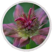 Early Spring Bee Balm Bud Round Beach Towel
