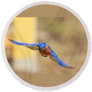 Eastern Bluebird Round Beach Towel by Everet Regal