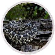 Eastern Diamondback-2 Round Beach Towel