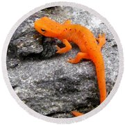 Orange Julius The Eastern Newt Round Beach Towel by Lori Pessin Lafargue