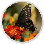 Eastern Swallowtail On Marigold Round Beach Towel