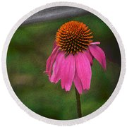 Round Beach Towel featuring the photograph Echinacea  by Nadalyn Larsen