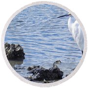 Egret Standing Perfectly Still Round Beach Towel by Patricia Greer