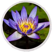 Egyptian Blue Water Lily  Round Beach Towel by Scott Carruthers