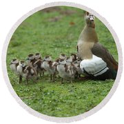 Egyptian Goose And Goslings Round Beach Towel