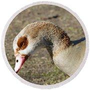 Egyptian Goose Profile Round Beach Towel