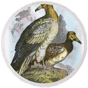 Egyptian Vulture Round Beach Towel by English School
