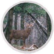 Eight Point Whitetail Deer Buck Round Beach Towel