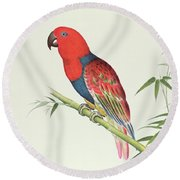 Electus Parrot On A Bamboo Shoot Round Beach Towel