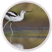 Elegant Avocet Round Beach Towel