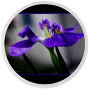 Elegant Iris With Black Border Round Beach Towel