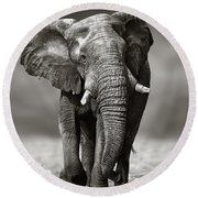 Elephant Approach From The Front Round Beach Towel by Johan Swanepoel
