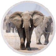 Elephant Bathing Round Beach Towel