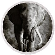 Elephant Bull Round Beach Towel