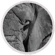 Elephant Bw Round Beach Towel