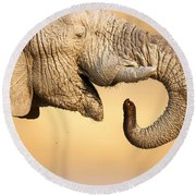 Elephant Drinking Round Beach Towel