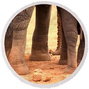Round Beach Towel featuring the photograph Elephant Family by Amanda Stadther