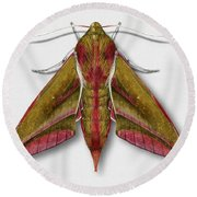 Elephant Hawk Moth Butterfly - Deilephila Elpenor Naturalistic Painting - Nettersheim Eifel Round Beach Towel