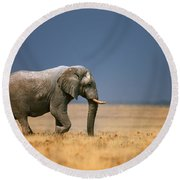 Elephant In Grassfield Round Beach Towel