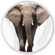 Elephant Isolated Round Beach Towel