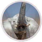 Elephant Portrait Round Beach Towel