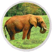 Round Beach Towel featuring the photograph Elephant by Rodney Lee Williams